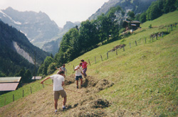 Raking hay with local farmers. The surface is rarely flat, and at times it is rather steep.