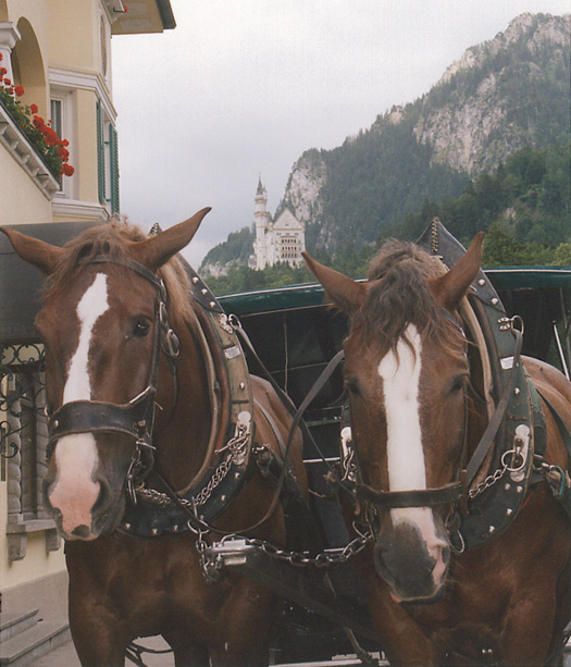 Instead of walking up to the castle you can take a ride with these two beautiful horses.